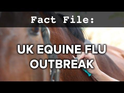 Fact File: UK Equine Flu Outbreak