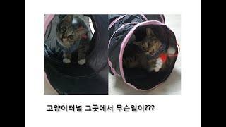 고양이에게 터널장난감을 주었어요 (cat toys)
