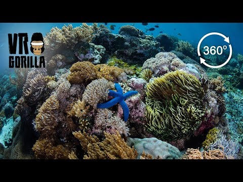 Freediving The Coral In Komodo National Park, Indonesia (360 VR Video)