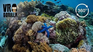 Freediving The Coral In Komodo National Park, Indonesia (360 VR Video) thumbnail