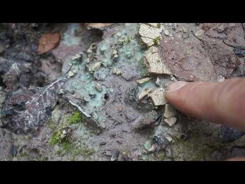 Находка остатков девонских рыб