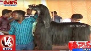 Bithiri Sathi Funny Conversation Over Dog Show In Tamil Nadu || Teenmaar News