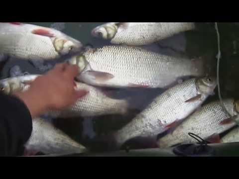 Снасть,которая ловит любую рыбу.Рыбалка на перетягу.