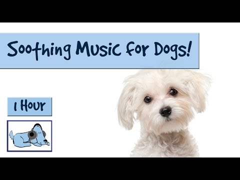 Music for Poodles, Maltese and Bichon Frise! Music to Relax Your Dog, Help Your Dog to Sleep