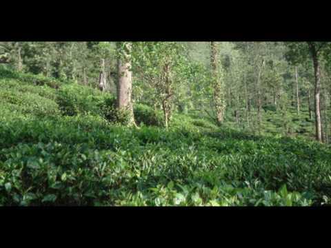 India Tamil Nadu Devala Amberina India Hotels India Travel Ecotourism Travel To Care