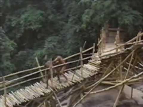 Tarzan and the great river jungle dance tarzan my tarzan