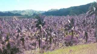 Philippine Goat Farm