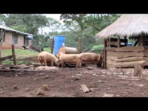 Tour of Mujila Falls Agriculture Centre in Zambia