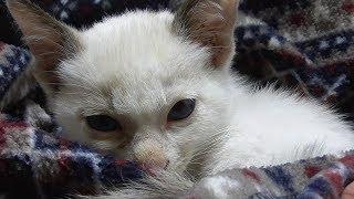 前回の動画から一夜明けた早朝に撮影しました。 子猫が必死になって母猫...