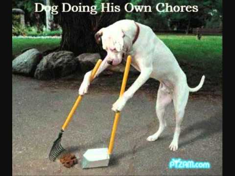 Funny Cats And Dogs D