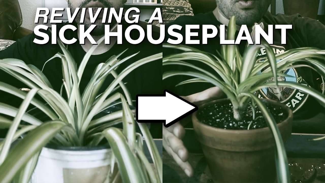 House Plant Rescue Saving A Spider Plant From Death Youtube,Best Dishwasher