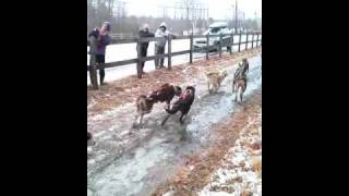 Rolling Dogsled Rides in Gorham, NH - Muddy Paw Sled Dog Kennel