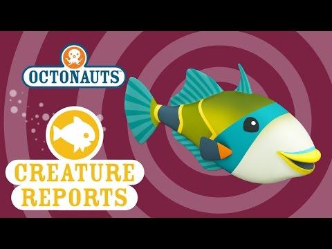 Octonauts: Creature Report - Humu