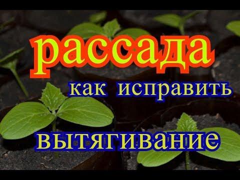 Выращивание Рассады Огурцов Как исправить Вытянутую Рассаду Стакан-Муфта от Возьми и Сделай