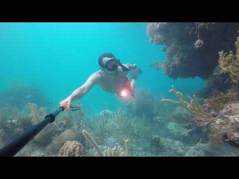 Freediving Horseshoe Reef