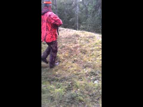 Vasan kaato Vampulassa, hirvi