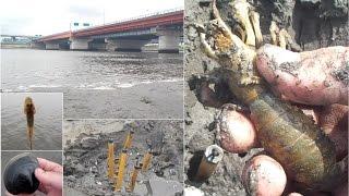 江戸川でアナジャコ捕り、河口の恵みまとめていただきます!
