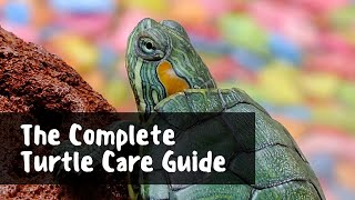 Keeping Turtles as Pets | What you need to know