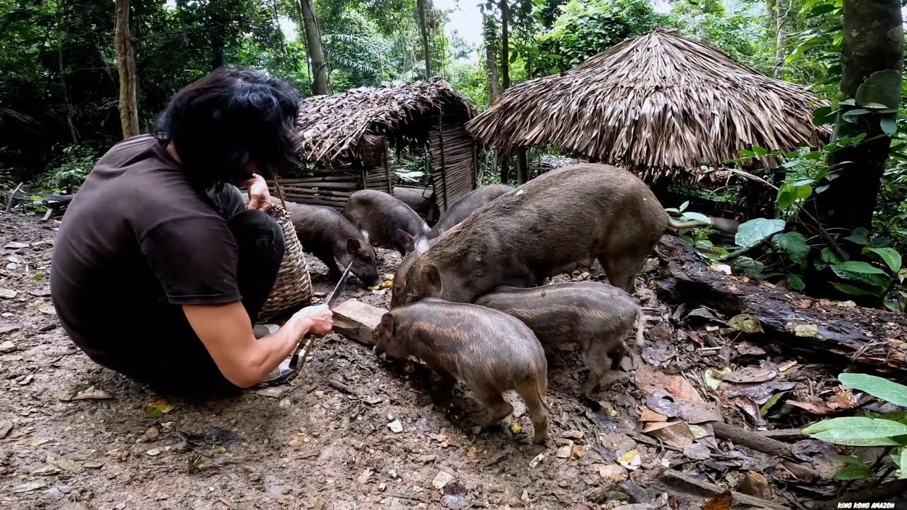 Download Wild Boars, Make Me Not Want To Leave, Survival Instinct, Wilderness Alone, survival, Episode 157
