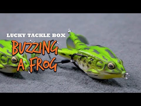 Buzzing a Frog for Big Bass Blowups