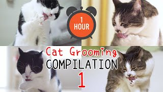 [ONE HOUR]  ASMR Cat Grooming Compilation | Curry Sugar Meow