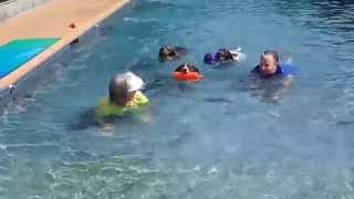 German Wirehaired Pointer Izzy Pit Bull Terrier Toby & German Shorthaired Pointer Gracie Swim