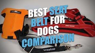 Best Seat Belt for Dogs Comparison (2018)