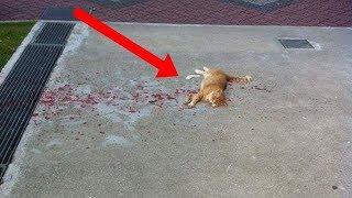 Alle ignorieren die Katze,aber eine Frau versucht Sie zu retten.Dann passierte etwas,womit sie