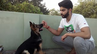How to teach sit command to your puppy in hindi.