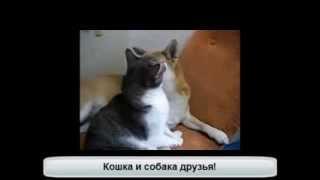 Любящая кошка ухаживает за  собакой!