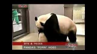 "Panda's ""Porn"" video   - Media Watch - Dec.19th.,2013 - BONTV China"