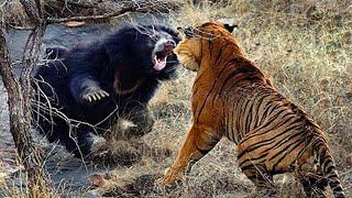 10 حيوانات يكرهون بعضهم البعض .. رقم 2 الأكثر حماساً وأثارة للدهشة على الأطلاق