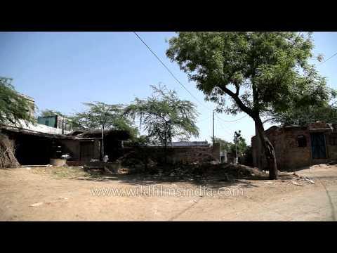 Deoli Village - Bharatpur, Rajasthan