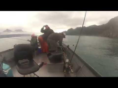 Resurrection Bay Silver Fishing