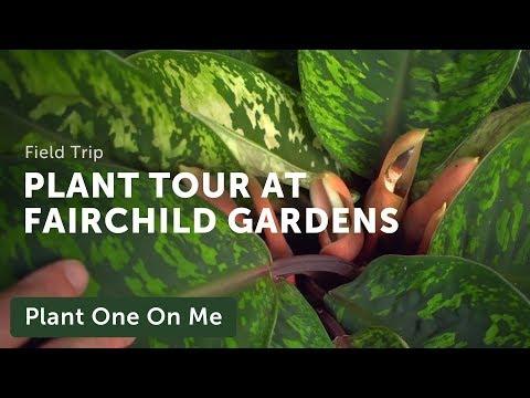 Meditative Botanical Tour At Fairchild Tropical Botanic Garden —Ep 182