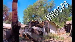 Black Oak Tree Slices Through Garage