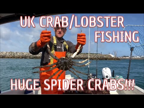 UK Crab/Lobster Fishing - HUGE Spider Crabs!!!