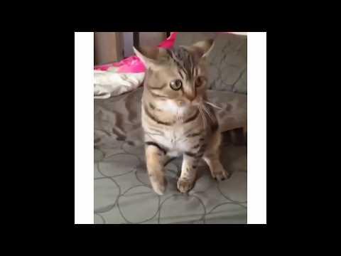 Приколы с котами  - PRANKS WITH CATS №3