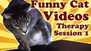 Funny Cat Videos Therapy 1: Cats Fight Bananas, Cat Plays Ipod And Other Funny Cat Vines