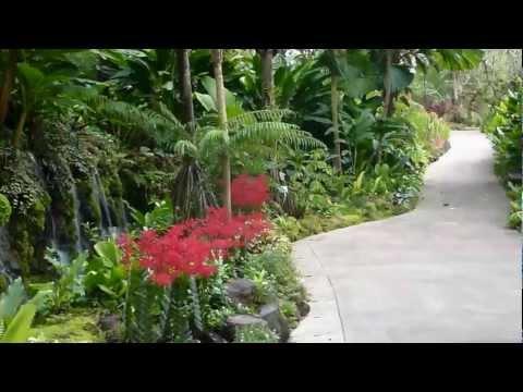 Singapore Botanic Gardens, HD Experience