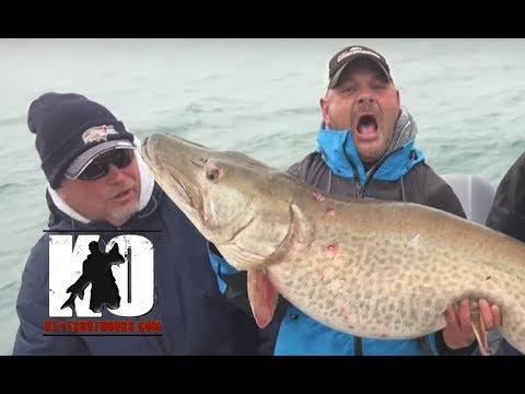 BIG Lake Saint Clair (LSC) Muskies - 50+ Inch Muskie