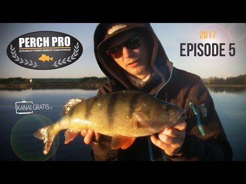 Perch Pro 2017 - EPISODE 5 - Kanalgratis.se (with German, French & Dutch subtitles)