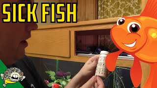 How to figure out what is wrong with your fish. Daily Dose 43