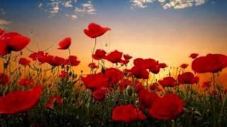 Primavera - The Gift