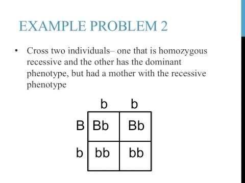 Worksheet Punnett Square Practice Worksheet punnett square practice problems simple youtube