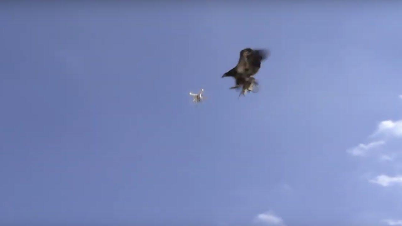 Google detiene entregas con drones por ataques continuos de aves - Forbes  Colombia