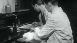Passive Immunity to Infectious Disease 1955