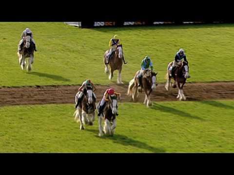 2016 Annual Clydesdale Stakes - Exeter Racecourse - Racing UK