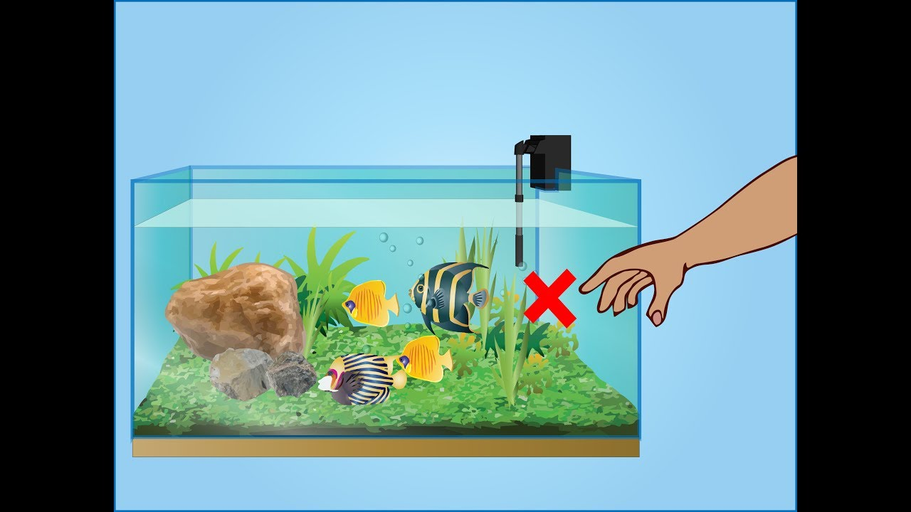 How to take care of aquarium fish in hindi youtube for How to take care of fish tank