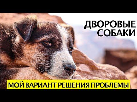 Как решить проблему бездомных и дворовых собак (большой выпуск)